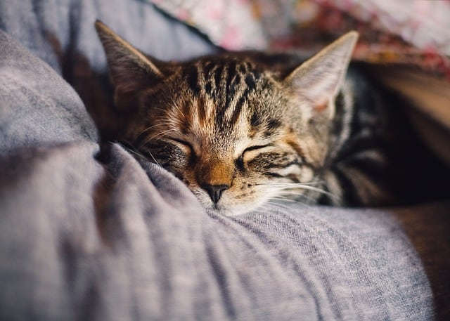 Сънят влияе добре на здравето